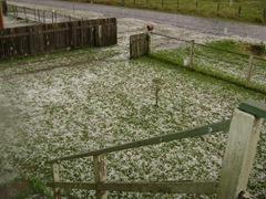 HAIL 015